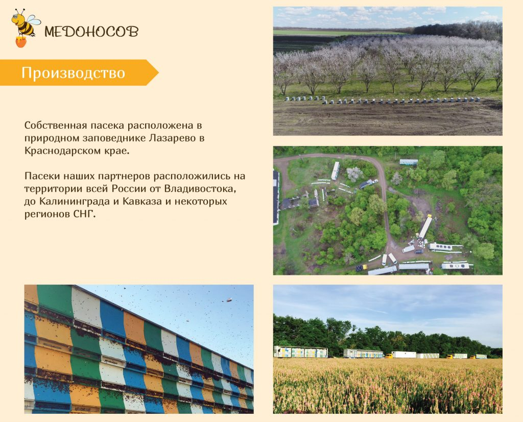 Медоносов-презентация-1-4